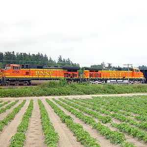 BNSF 4756 at Stanwood