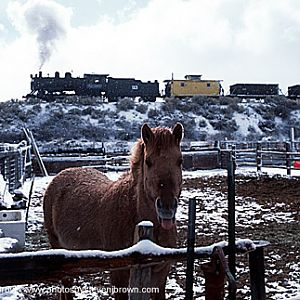 Iron Horse and Horse in the snow