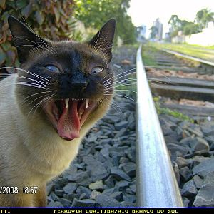 The Rail Cat